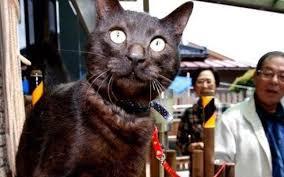 pisica-suika